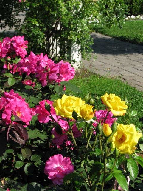Raise a Rose Garden
